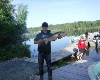 Huge 31 inch walleye on Perrault Lake