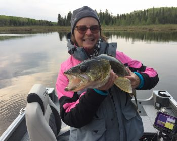 Trophy Walleye fishing at Rainbow Point Lodge at Perrault Falls, on Perrault Lake, Ontario, Canada